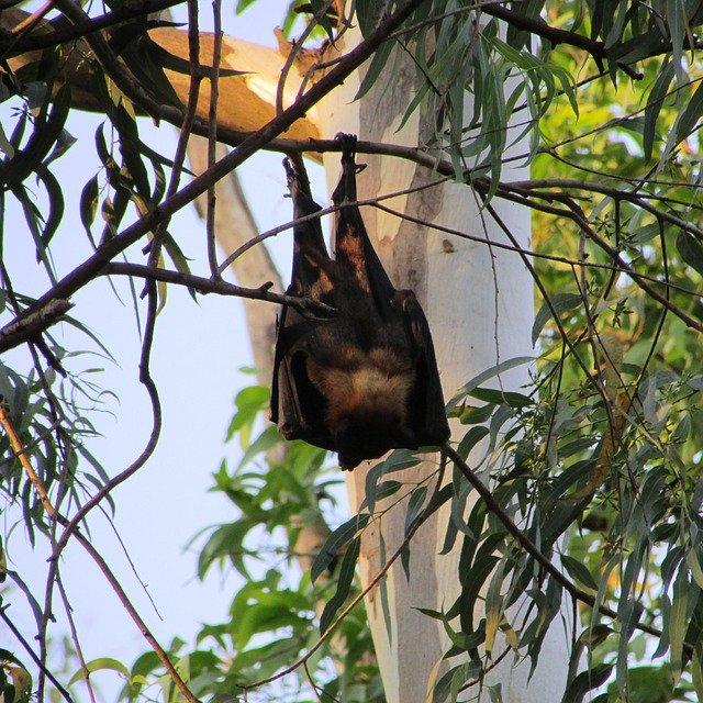 netopýr na větvi