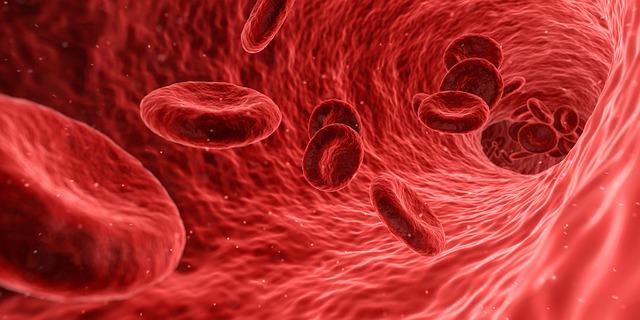 červené krvinky