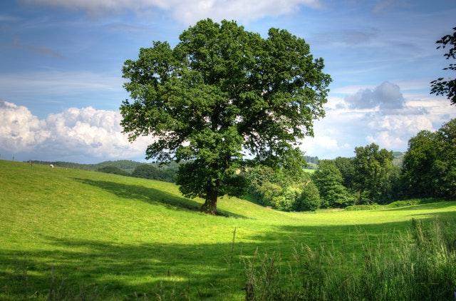 vysněné bydlení v přírodě