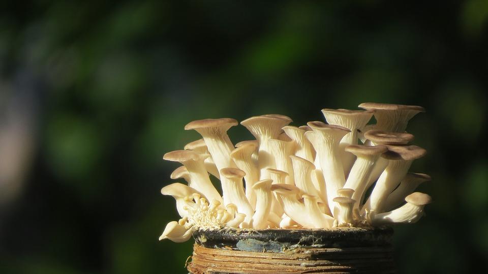 žluté houby